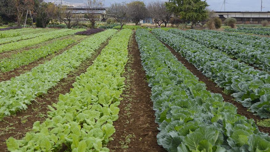 top_our_farm